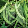 Dolichos Bean Konkan Bhushan