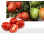 Tomato DURUM
